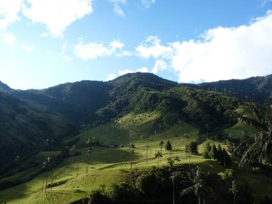 vallee-de-cocora-et-ses-palmiers-geants